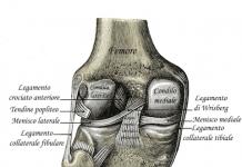 legamento crociato anteriore
